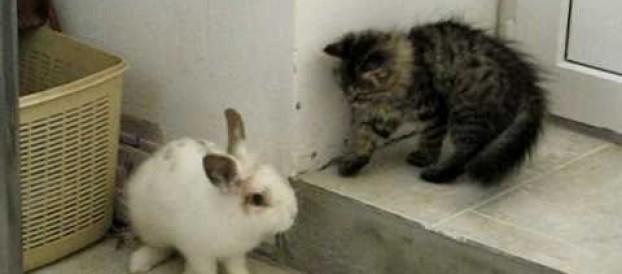 Котенок играет с кроликом