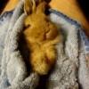 Смешной кролик ест морковку