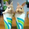 Смешные кролики в стаканах