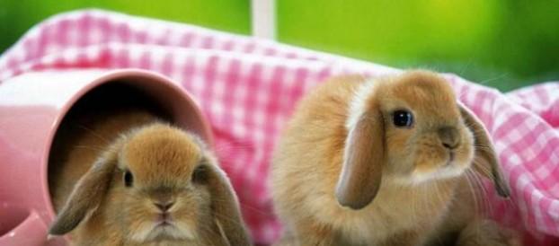 10 фактов о кроликах