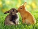 Как определить пол маленьких крольчат
