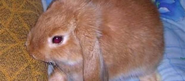 Как спасти мебель от зубов вашего кролика.
