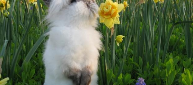 Карликовые кролики — идеальные домашние питомцы.