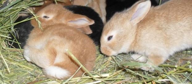 Сено для кроликов: Основа для здорового питания