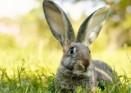 Кролики-спасатели!