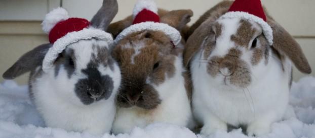 Подборка фотографий с кроликами на тему Нового года