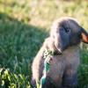 Выгул домашнего кролика