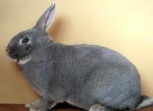 Кролик белка