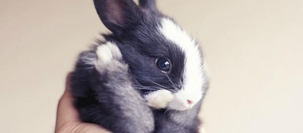 Разведение кроликов — интересно и перспективно