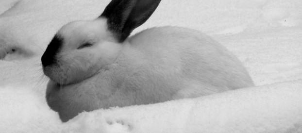Зимнее разведение и содержание кроликов