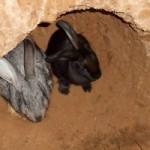 Кролики археологи