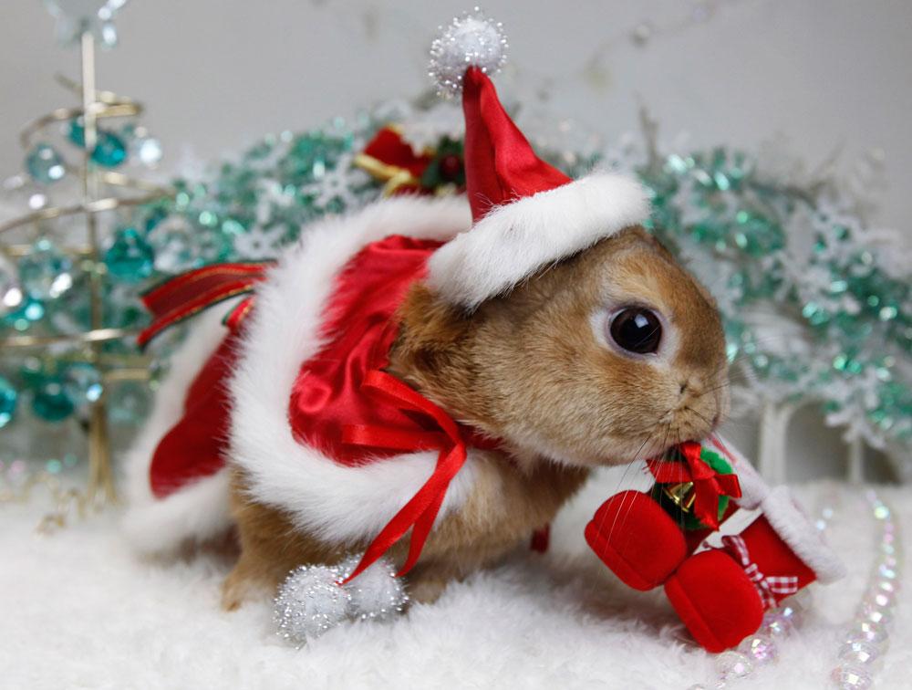 Животное в россии новый год