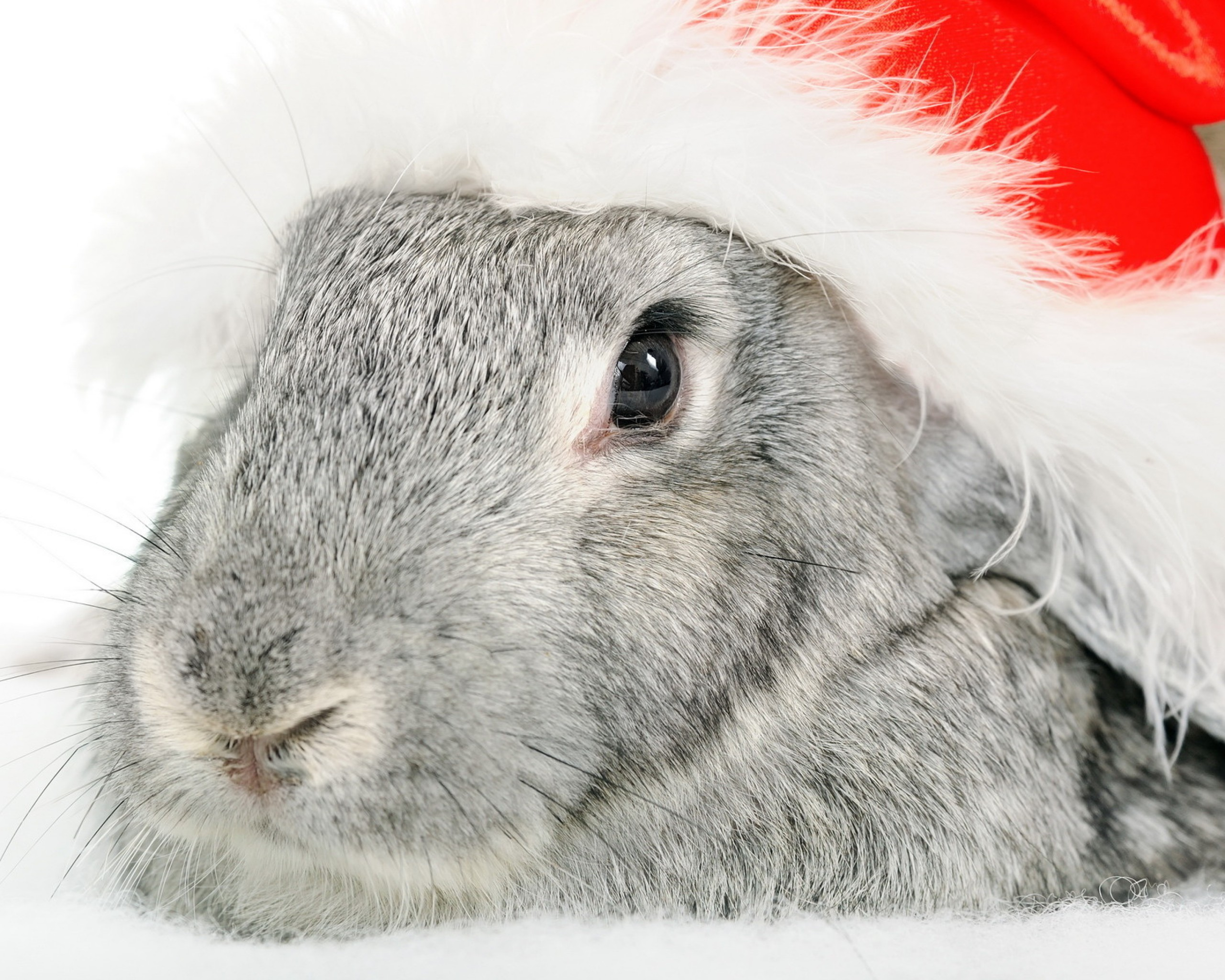 Kaninchen-Hasen-Weihnachtsmützen-2048x2560[1]