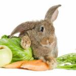 Сколько комбикорма съедает кролик в день